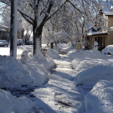 The heavy wet snows bowed many branches and numerous tree arches adorned Marquette Neighborhood sidewalks.