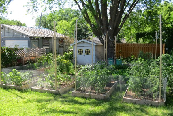 The extensive garden in the backyard of Grampa's Pizzeria which supplies fresh ingredients for their menu.