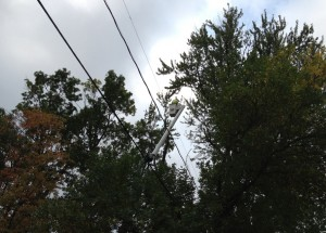 The majestic tree canopy, which has existed for decades along Jenifer is occasionally trimmed for utility line right of way. Any tree replacements would feature tree species that would not grow to power line height.