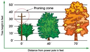 Pruning and planting guide from Madison Gas & Electric. Courtesy: MG&E